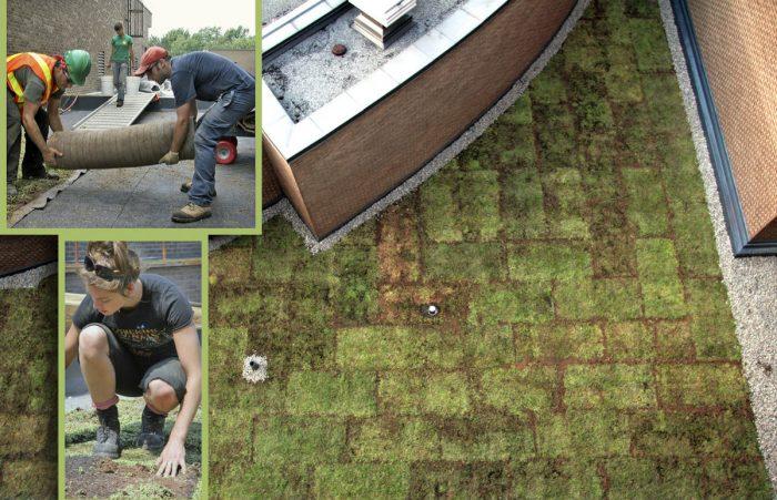 Collège de Rosemont - Développement durable - toits verts